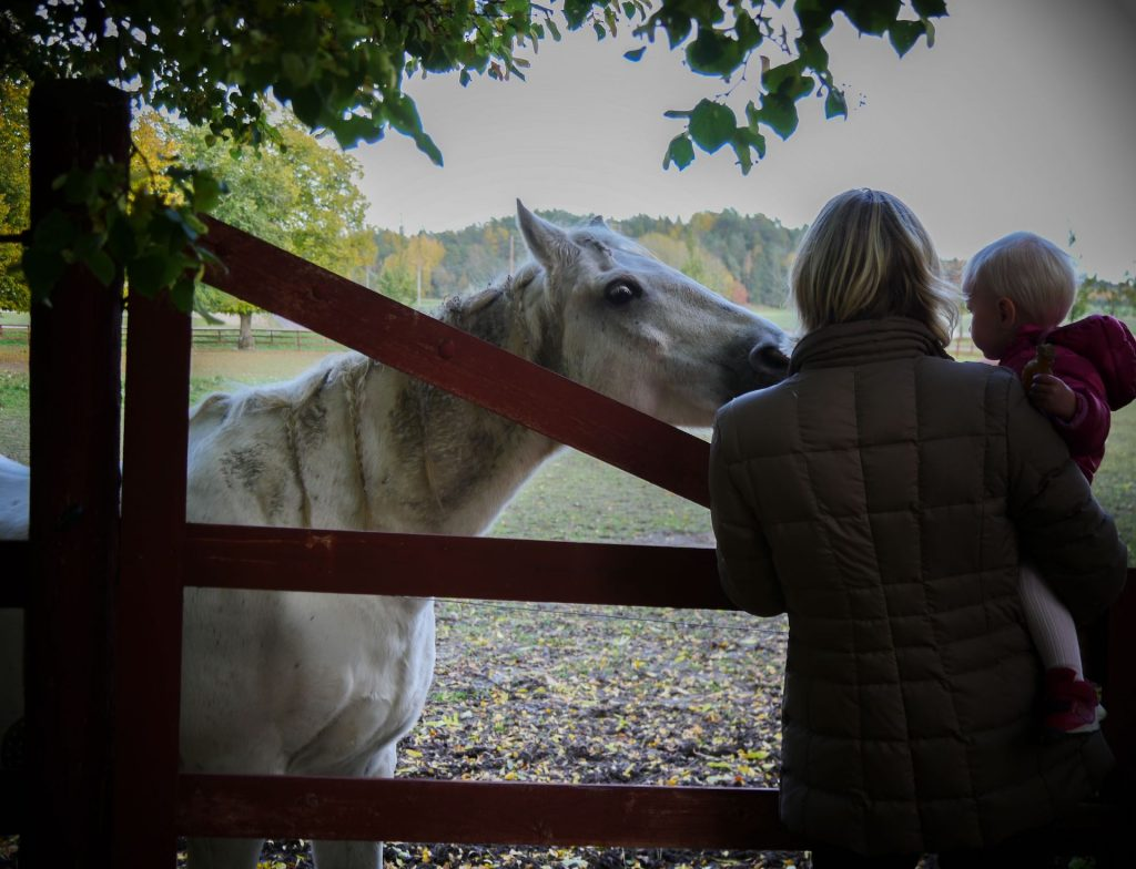 Häst Trosa